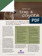 Coyote Traps