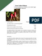 Como Cultivar Rabano.docx