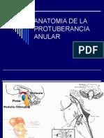 4anatomia-de-la-protuberancia-anular-1221776822382145-9.ppt