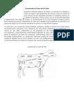 Características Físicas de La Carne