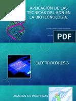 Aplicación de Las Técnicas Del ADN en La