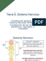 Tema++6+grado.+.Sistema+Nervioso.ppt