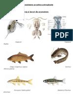 Poze specii ecologie XII