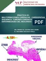 [Lab] Patología II - Miocardio y Endocardio