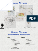 Sistema Nervoso Exame Professor