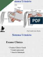 urinario14.pptx