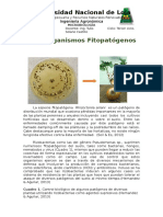 MICROORGANISMOS FITOPATÓGENOS