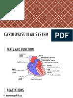 Cardiovascular System Heart