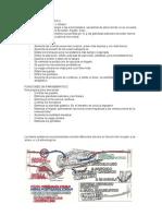 SNP. sistema nervioso periférico
