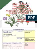 Tamaños, Formas y Agrupacion de Los Microorganosmos