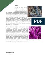 Reino Arqueobacteria