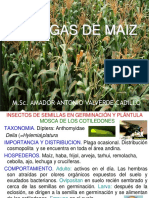 4. Maiz, Caña y Arro (60)2015-II Jj