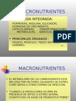METABOLISMO Y MACRONUTRIENTES