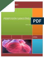 Perfusion Sanguinea Final PDF