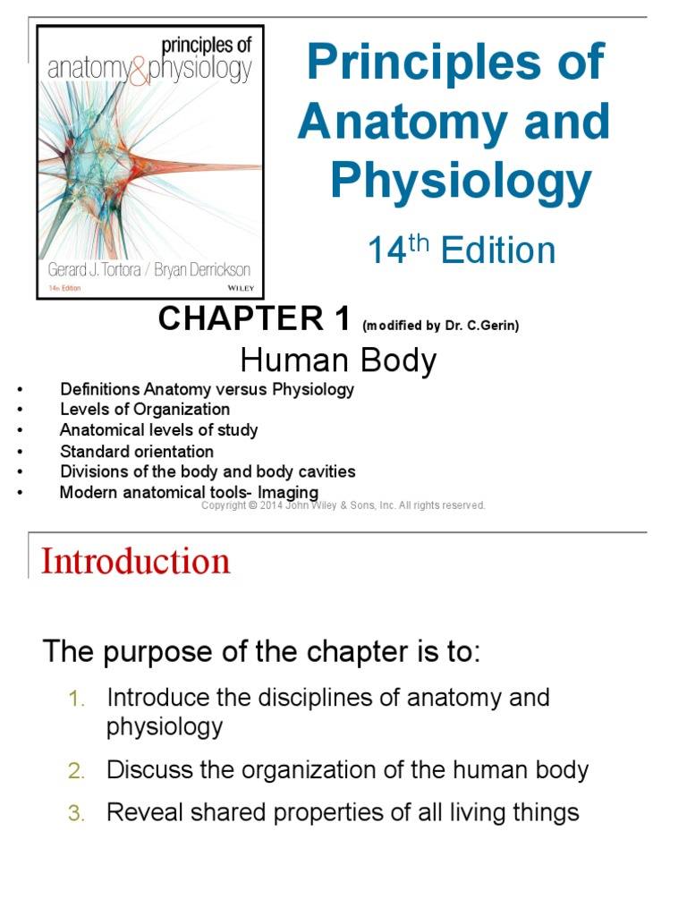 Ch01cglect Autopsy Human Body