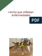 Perros que olfatean enfermedades