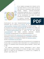 Cloroplastos perinoides