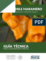 Chile Habanero