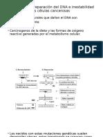 Defectos en la reparación del DNA e inestabilidad