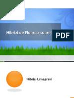 Hibrizi Floarea Soarelui