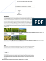 Rice _ Diseases and Pests, Description, Uses, Propagation