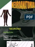 Neuroanatomia08