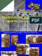 Diaposet2. Ojo Anatomia de La Madera (1)
