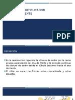MECANISMO DE CONTRACORRIENTE2.pptx