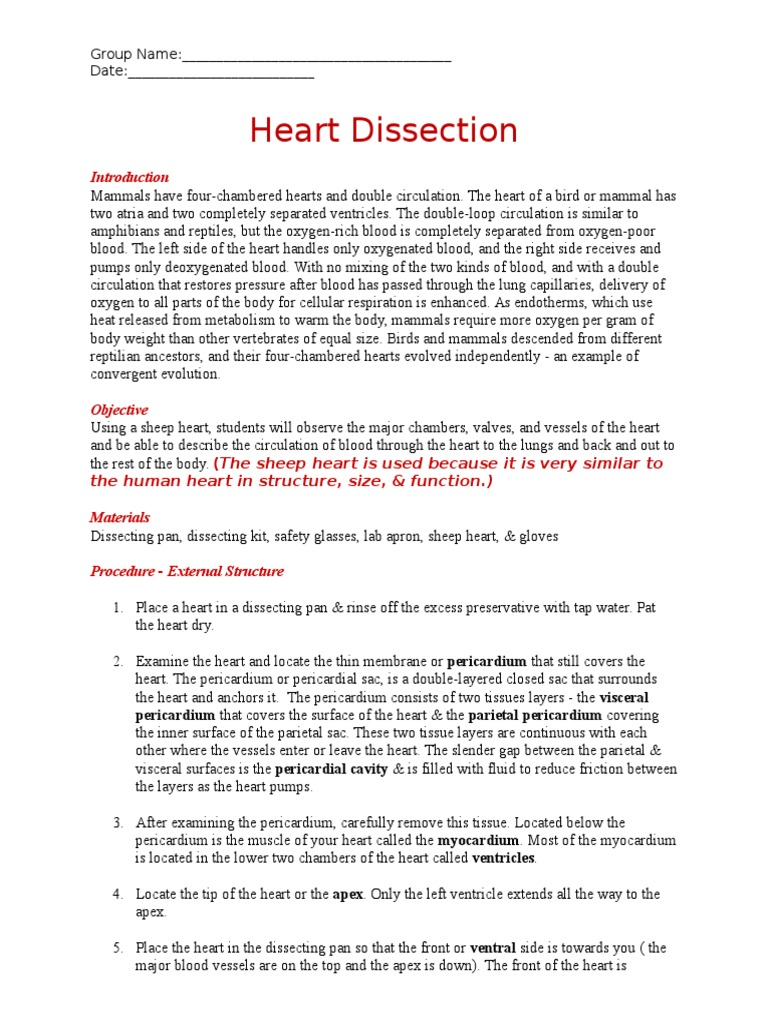 Worksheets Sheep Heart Dissection Lab heart dissection worksheet valve heart