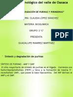 Síntesis y Degradación de Purinas