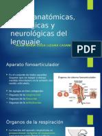 5 de Diciembre Bases Neurofisiológicas Del Lenguaje