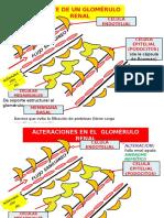 Sindrome Nefrotico, Nefritico, Falla Renal