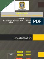 Hematopoyesis. Universidad Veracruzana.