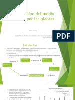 Evolucion de Las Plantas (1)