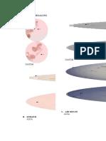 Laporan Praktikum Diatom Dan Alga