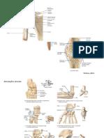 imagens de articulações e músculos.pdf
