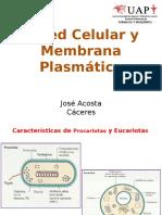 paredcelularymembranaplasmtica1-130623202242-phpapp02