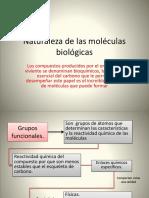 15. NATUALEZA DE LAS MOLECULAS BIOLOGICAS (1).pdf