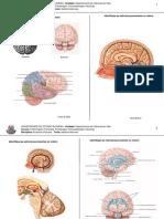 Exercício de fixação e imagens do sistema nervoso.pdf