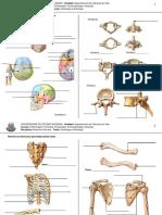 exercicio de fixação de osteologia e artrologia.pdf