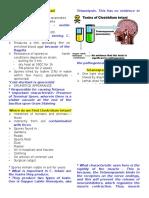 2b 2c Fifi Clostridium