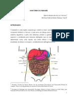 Anatomia Do Abdome