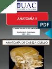 1.AnatOmÍa