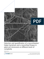 Detection Mycorrhization Helper Bacterium