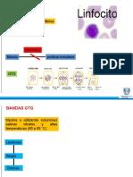 Genetica-Metodo CTG