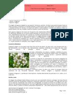 Oregano_2013_03Mar.pdf