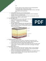Fungsi Lipid Secara Umum