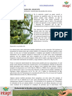 01. nutricion balanceada del aguacate.pdf