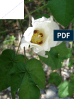 Genetic studies of genotypic responses to water stress in upland cotton (Gossypium hirsutum L.)