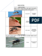 ESPECIES DE DIPTERA-HYMENOPTERA-ORTHOPTERA.pdf